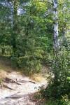 Тропа в лес.