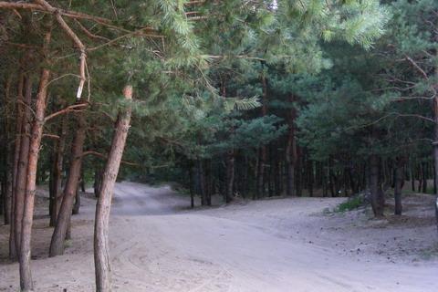 Дорога из лесу к озеру.