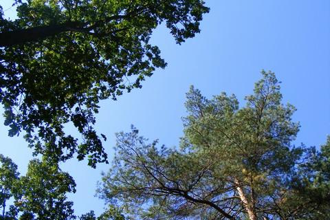 Верхушки деревьев.