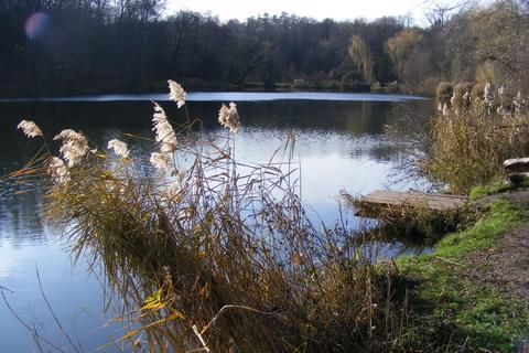Озеро в Голосеево. Мостик для ловли рыбы.