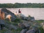 Рыбалка и горные козы.