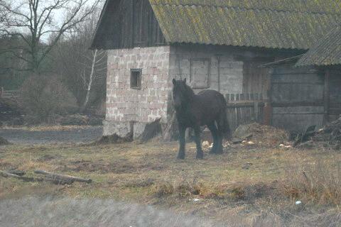 Дом и лошадь.