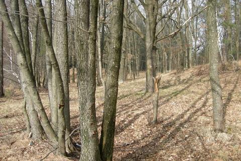 Лес на берегу водохранилища.