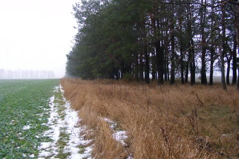 Наливайковка. Вид на поле 3.