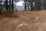 Наливайковка. Вид на поле 2.