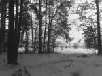 Лесополоса возле Заваловки.