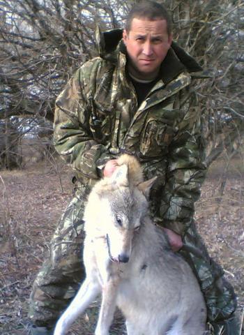 Астраханская область. Волк.