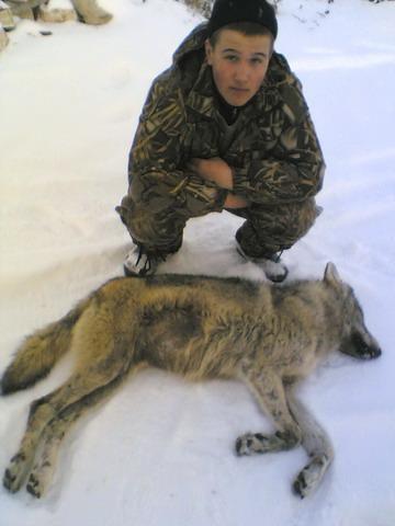 Астраханская область. Волк, добытый юным охотником.