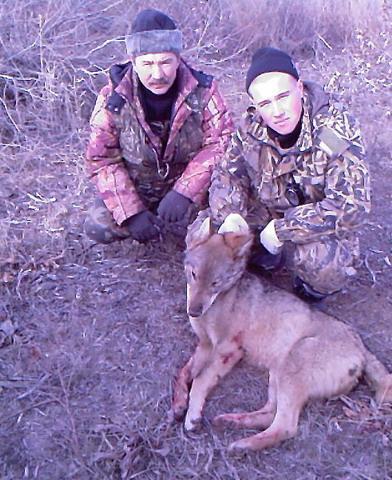 Астраханская область. Охота на волка.