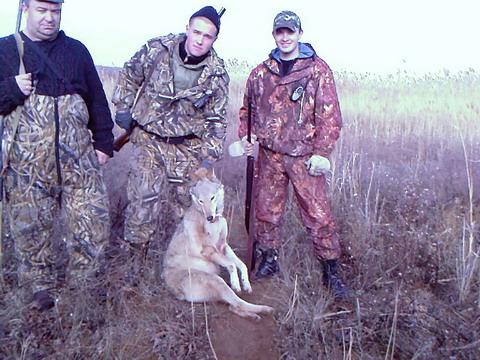 Астраханская область. Удачная охота на волка.