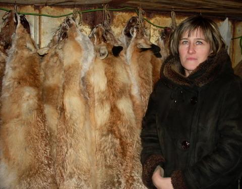 Охота в Астраханской области. Лисьи шкуры.
