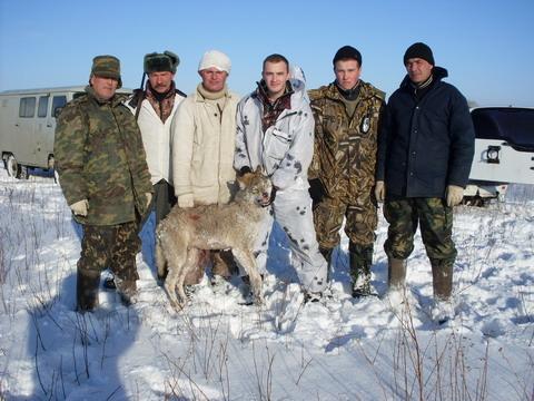 Астраханские степи. охота на волка.