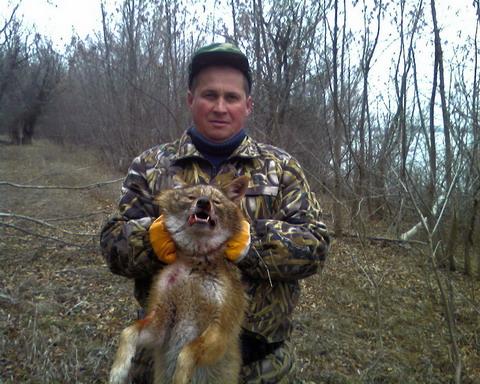 Охота в Астраханской области. Шакал.