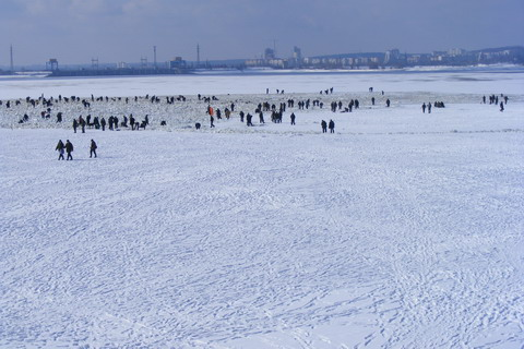 Гибель рыбы на Киевском водохранилище. Рыбаки на льду недалеко от ГЭС.