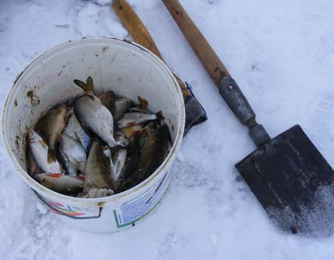 """Гибель рыбы на Киевском водохранилище. """"Улов"""" при помощи нехитрого снаряжения."""