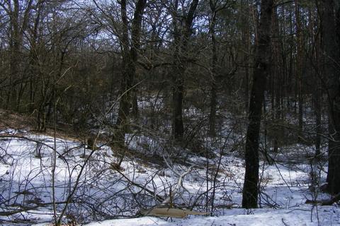 Киевский укрепрайон. ДОТ 179. В лесу около Виты-Почтовой.