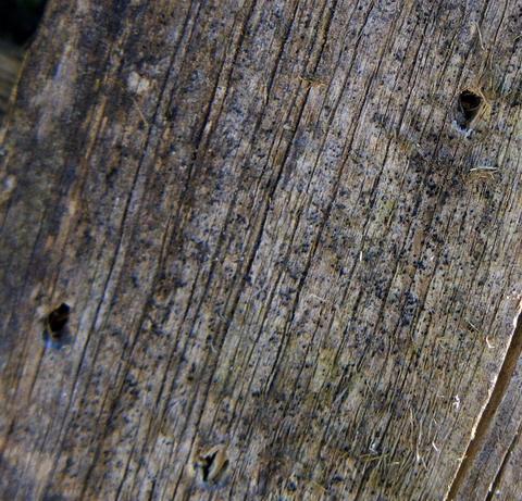 Патрон ТАХО Патриот 20/70 дробь №2 навеска 28 граммов. Отверстия в доске.