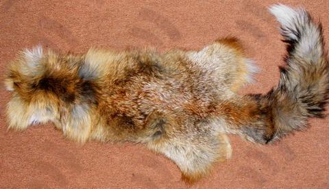 Шкура лисы. Общий вид.