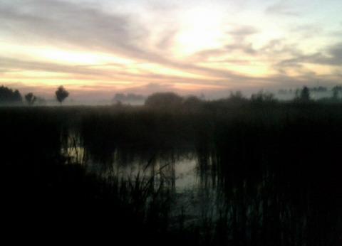 Болото под Макаровом до восхода Солнца.