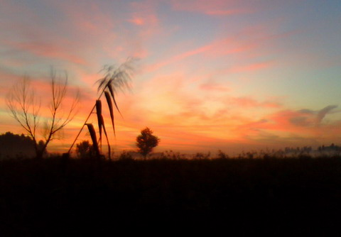 Восход на болоте под Макаровом.