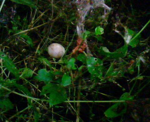 Яйца в зарослях.