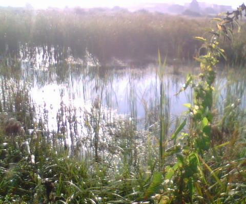 Место, где доставал из болота птичку.