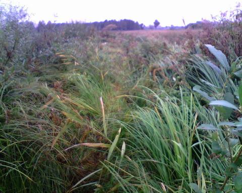 <b>Утро на болоте. Без результатов.</b>