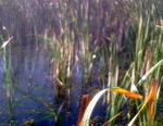 <b>Засидка на гуся. Затопленный карьер под Макаровом.</b>