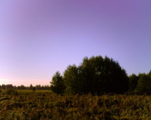 Лесок на берегу реки Здвиж.