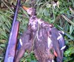 <b>Охота на утку. Затопленный карьер под Макаровом.</b>