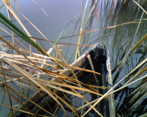 Охота в Черкасской области. Лодка в камышах.