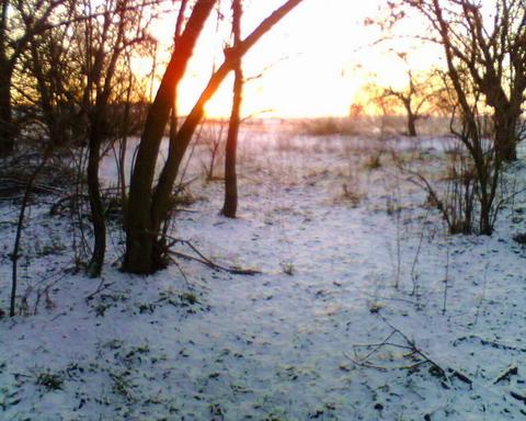 Пробная засидка на лису. Снег во фруктовой посадке.