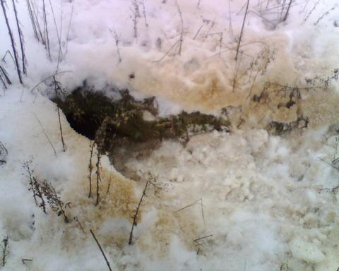 Нора лисы со свежими следами.