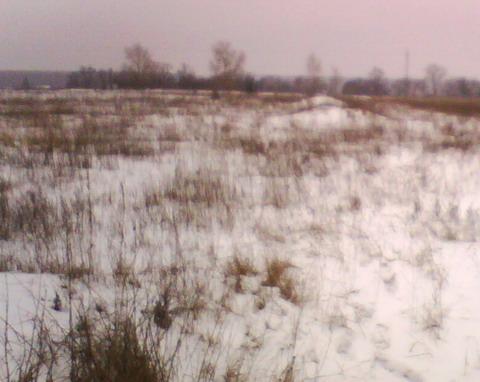 Бугорки на поле.