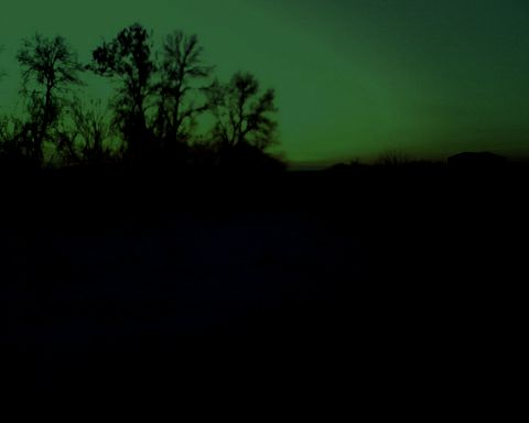 <b>Ночная засидка с манком на лису.</b>