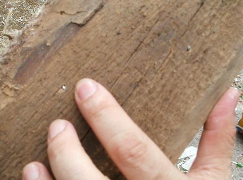 Результат попадания дробин №4 патрона ТАХО Аскания.