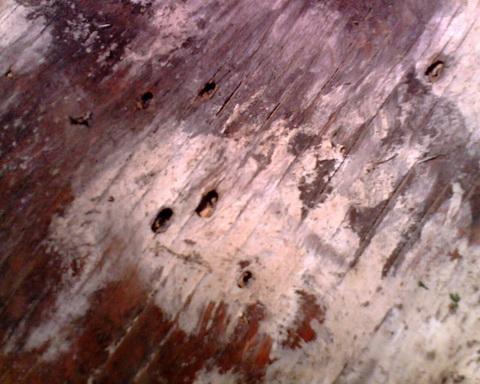 Следы дроби в сырой фанере при стрельбе с 35 м. Крупные - дробь №0, мелкие - дробь №4.