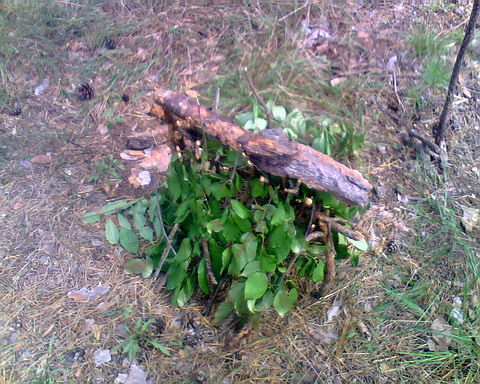 Домик лесовичка.
