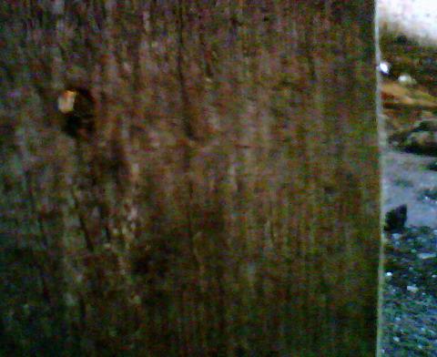 Входное отверстие картечины 8.2 мм в доске толщиной 25 мм.