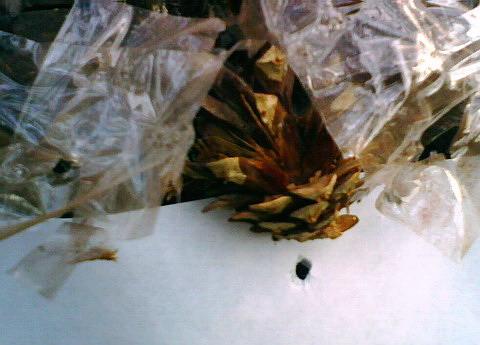 Шишка после попадания пульки 4.5 мм с расстояния 15 м.