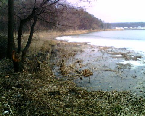 Берег пруда в районе сел Круглик.