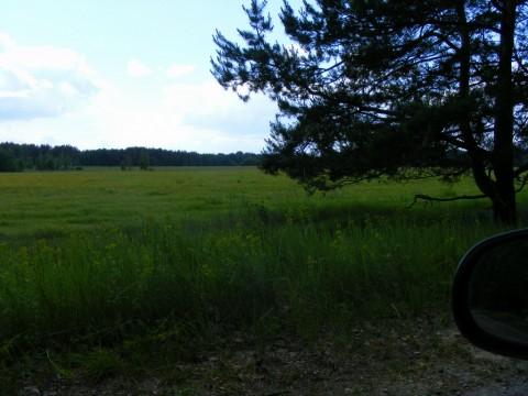 Вид от бетонки на поле.