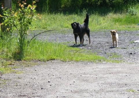 Сторожевые псы в автопарке.