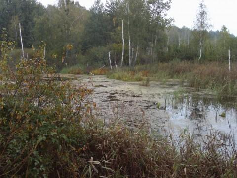 Крымок. Болото справа от первого озера.