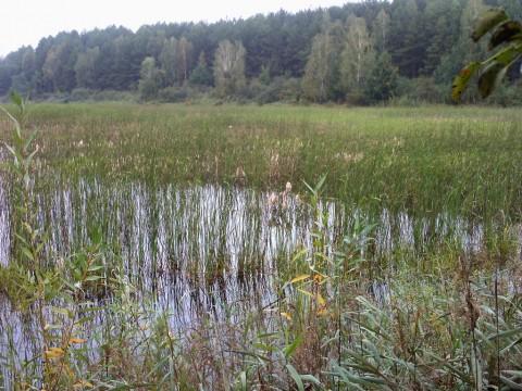 Дальний угол первого озера.