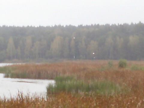 Дальний угол второго озера. Взлетают цапли.