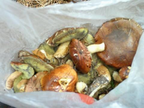 Мои грибы.