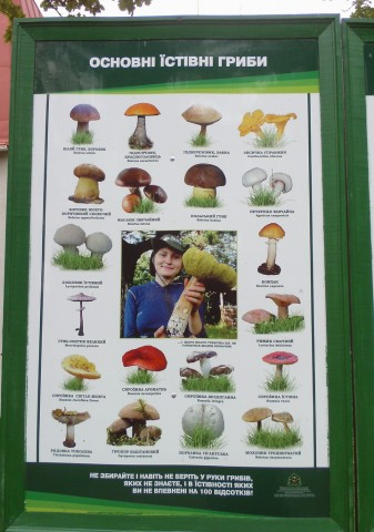 """Комаровское лесничество. Информационный стенд """"Съедобные грибы""""."""