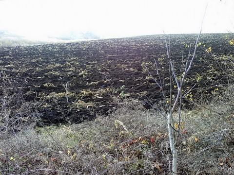 Одно из полей в окрестностях села Безпечне.