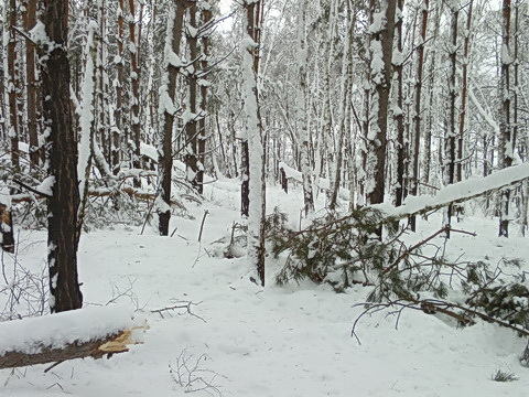 Балка возле Зуровки. Снег.